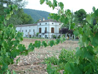 bodegas-los-pinos-wine-pleasures