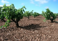 Wine Pleasures vina-roja1