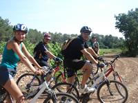 Wine & bike web